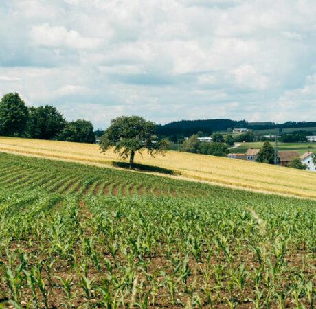 épandage de produits phytosanitaires