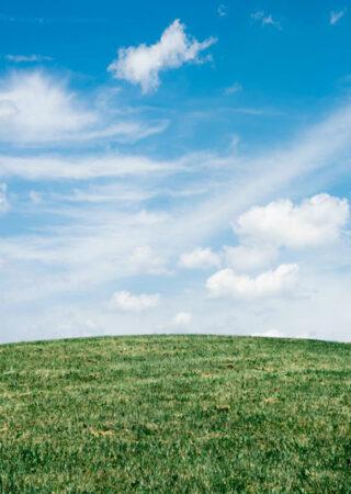 Ammoniac agriculture