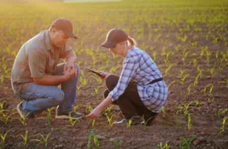 optimisation entreprise agricole