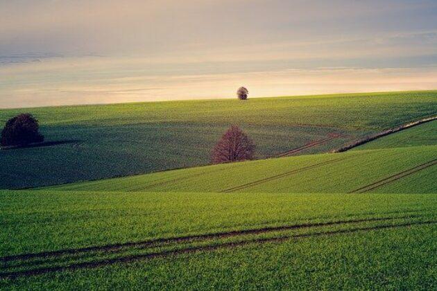 plan de relance agricole