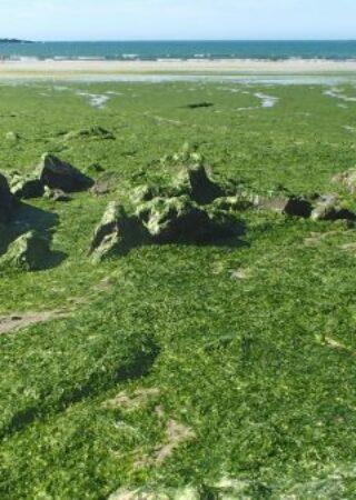 lutte algues vertes